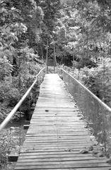 Dschungeltour2