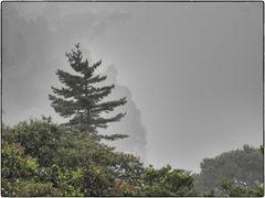 DSCN2149_Snapseed
