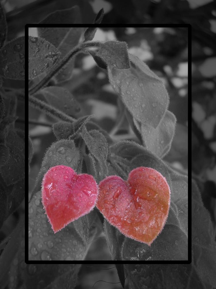 Du bist mein Herzblatt. Foto & Bild | pflanzen, pilze