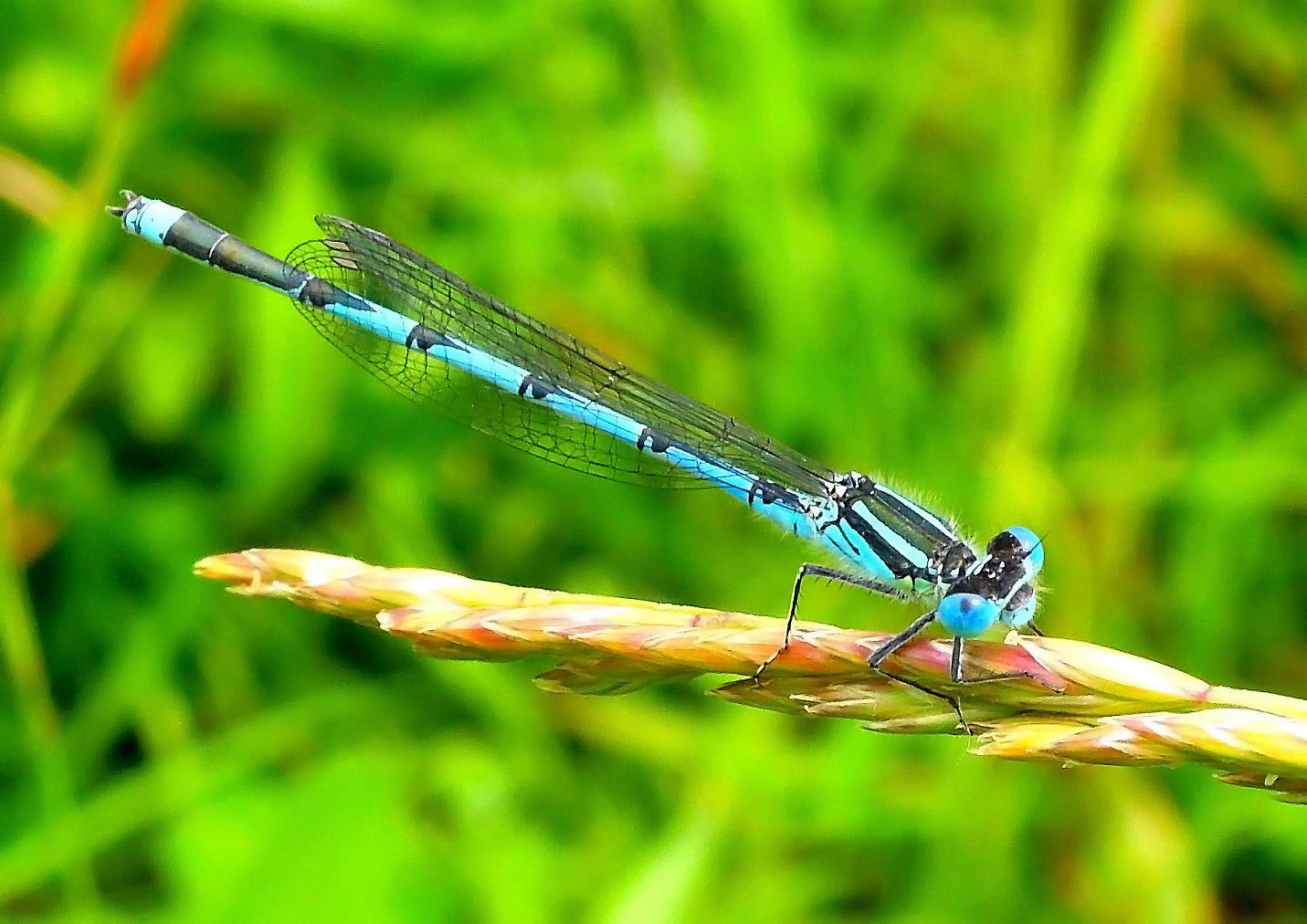 Du hast so schöne blaue Augen Foto & Bild  tiere, wildlife