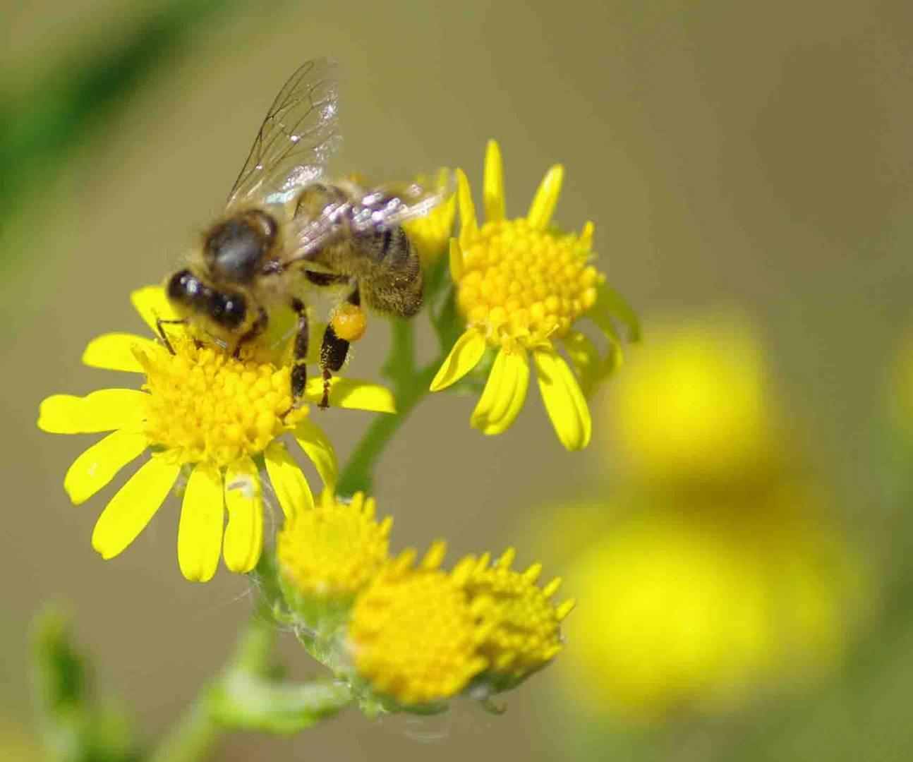 du miel bientot