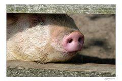 Du musst ein Schwein sein...