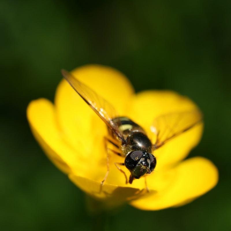 Du pollen plein les yeux