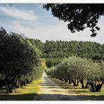 Du vent dans les oliviers