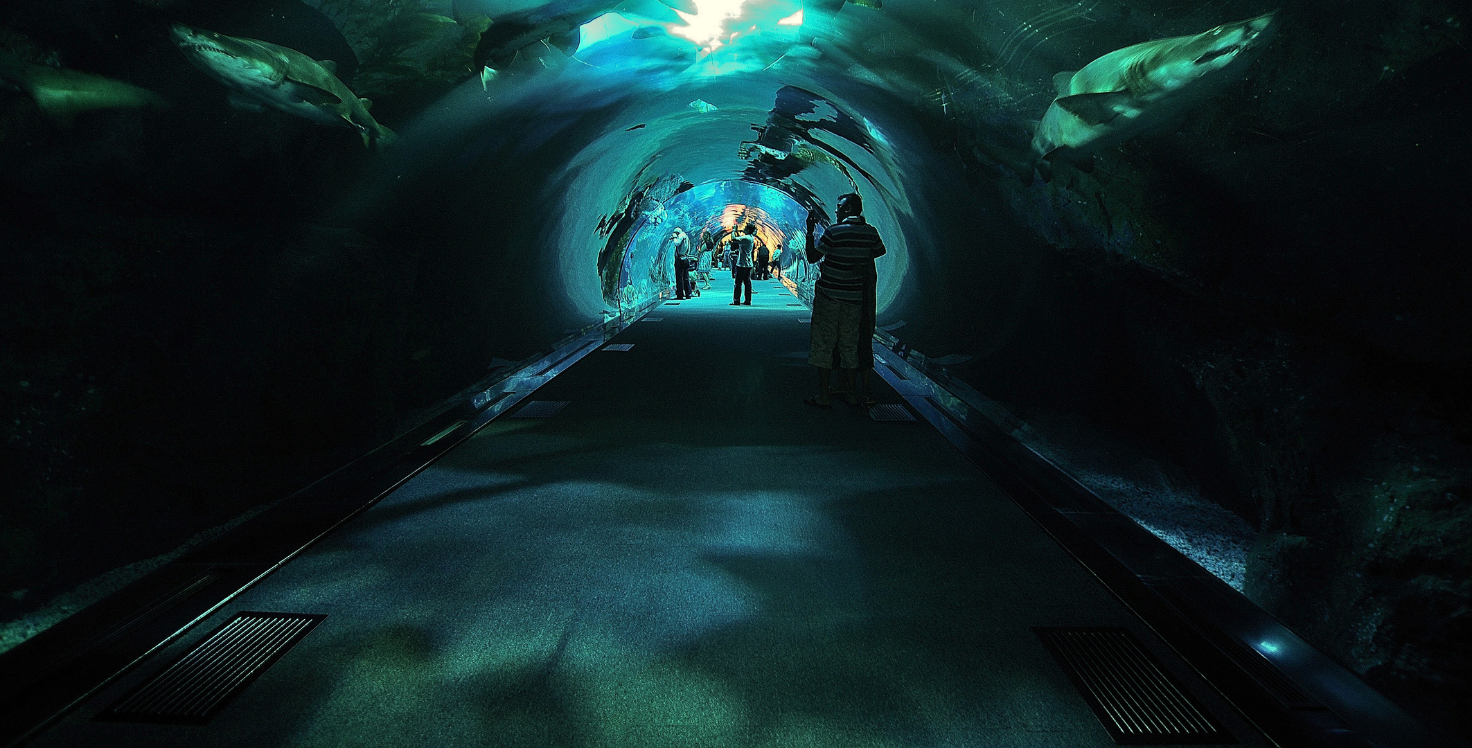 Dubai Aquarium - die Roehre