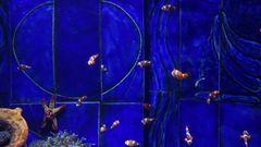Dubai Aquarium Kleine Nemos