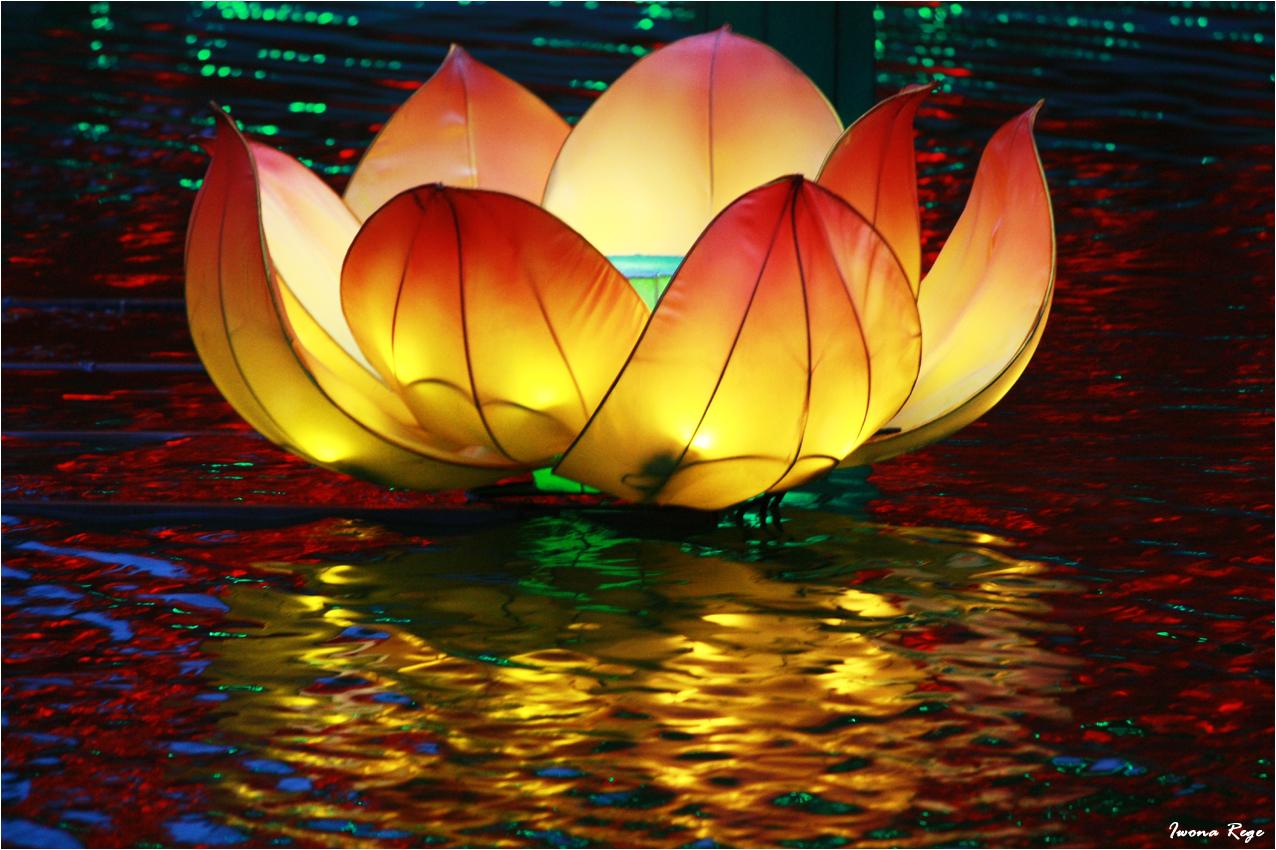 Dubai Garden Glow.