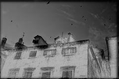 Dubrovnik y los pájaros