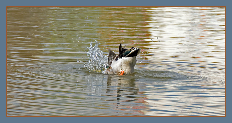 Duck and Dive....