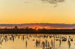 ducks and sunset