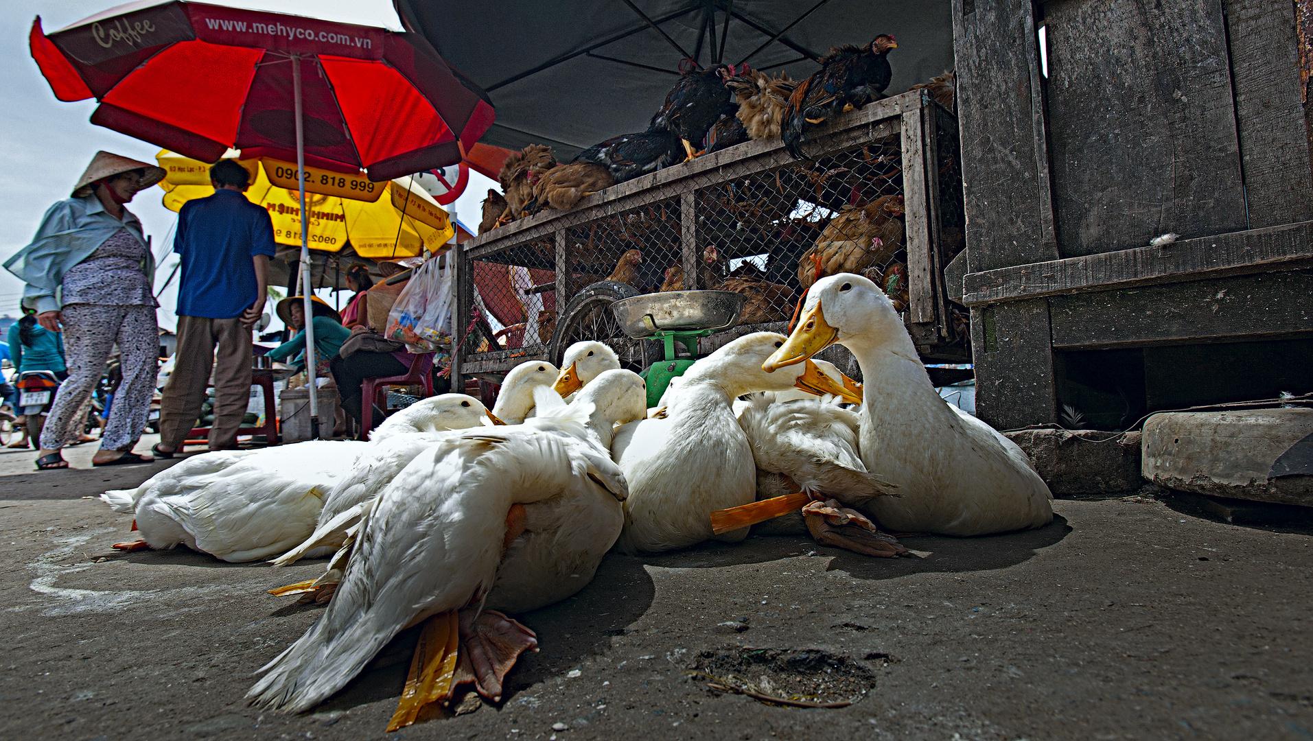 Ducks at the market
