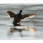 Ducks on Ice - Lesson 3