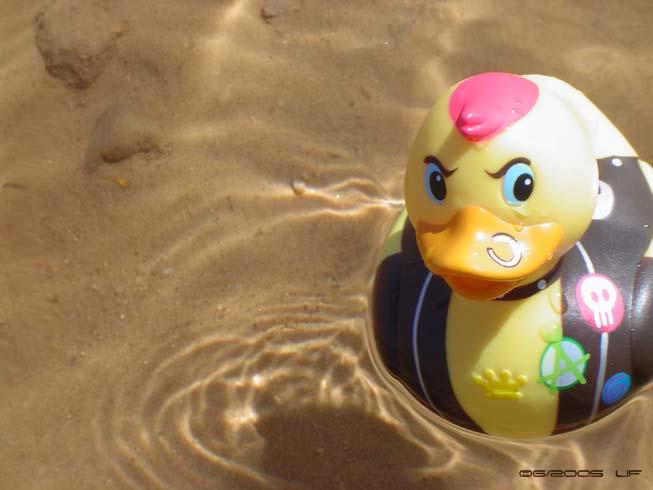 ~* Ducky *~