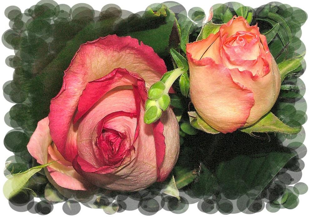 Due rose per gli amici di Fc,