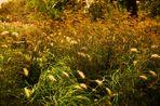 Düfte im Pflanzenreich........in überbordernder  Natur