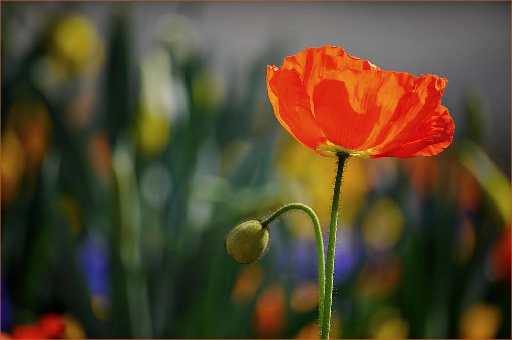 Düfte sind wie die Seele der Blumen,...