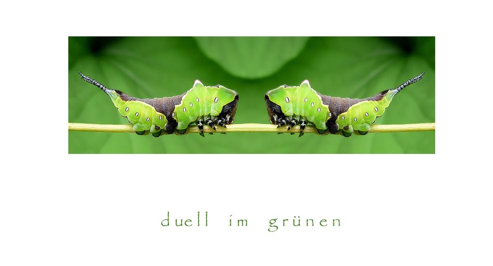 ~ duell im grünen ~