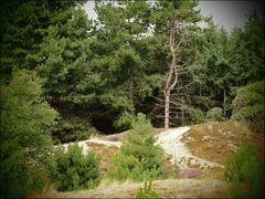 Düne Heide Wald