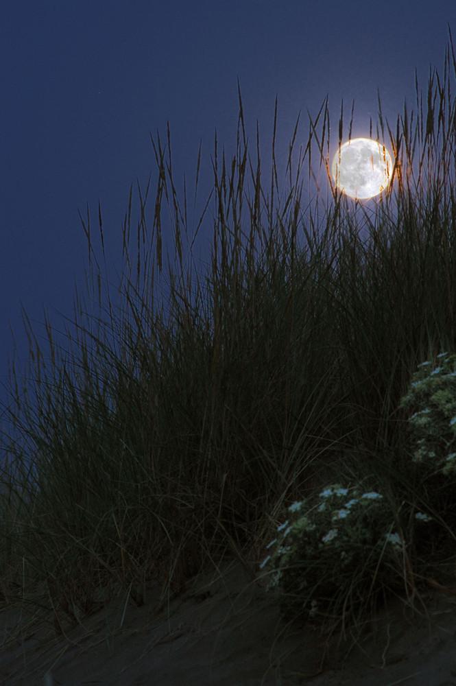 Düne in der Nacht - nur der Mond hat gewacht
