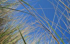 Dünengräser I