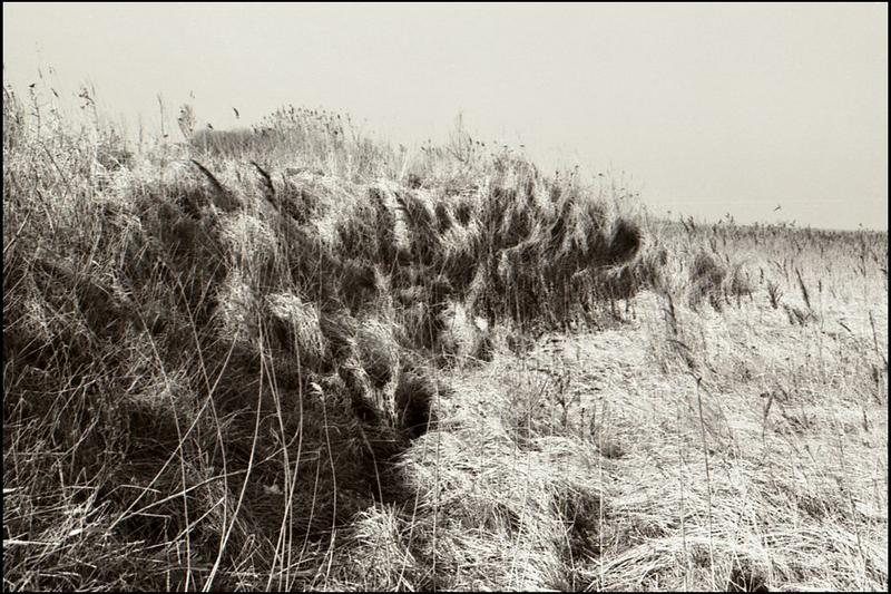 Dünengras im Winter