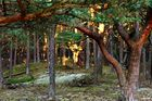 Dünenwald Teil 3