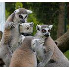 Dürfen wir Sie fotografieren?