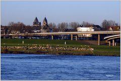 Düsseldorf - idyllisches Ufer in Oberkassel