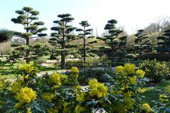 Düsseldorf - Japanischer Garten im Nordpark