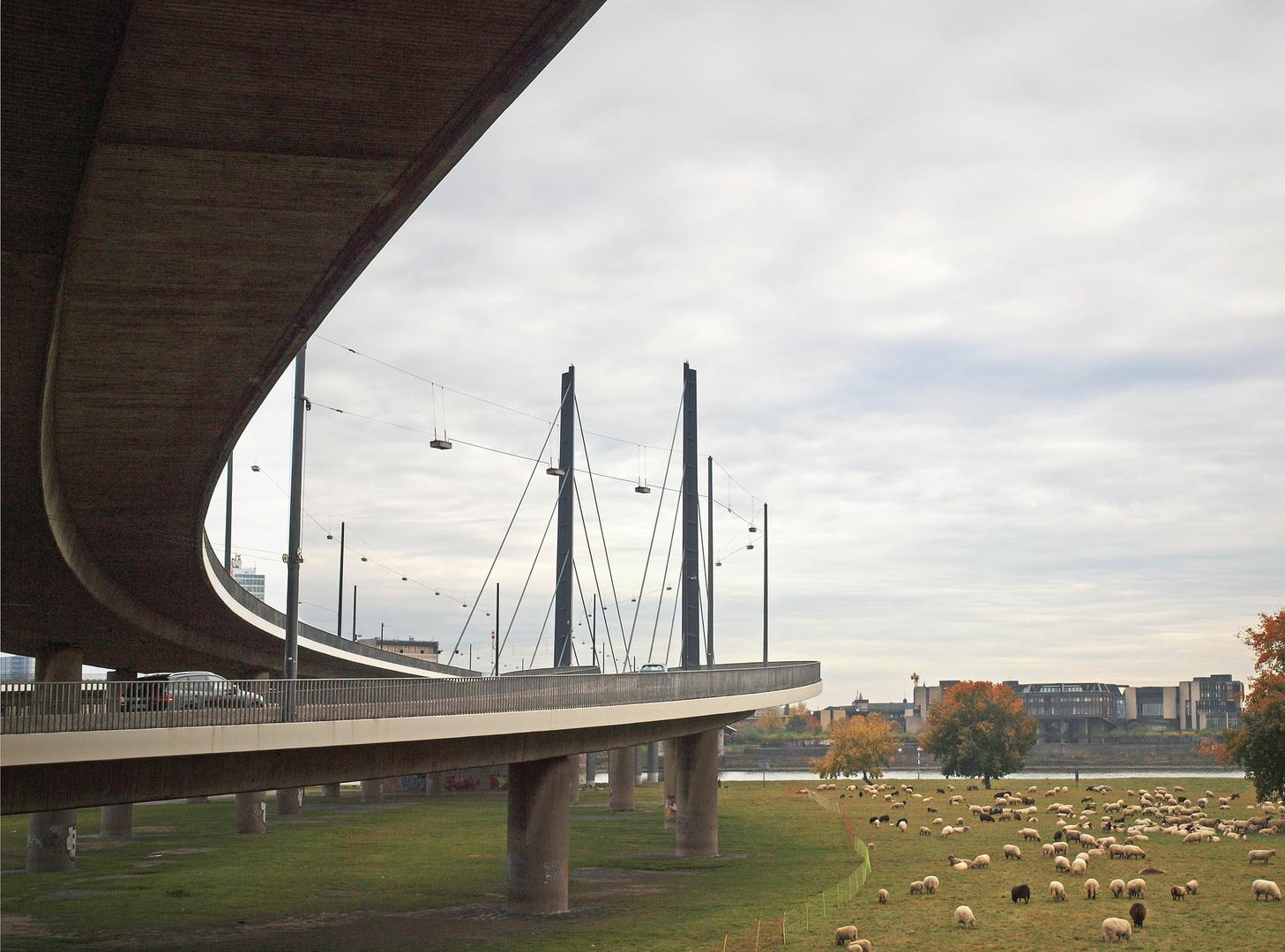 Düsseldorf Rheinkniebrücke