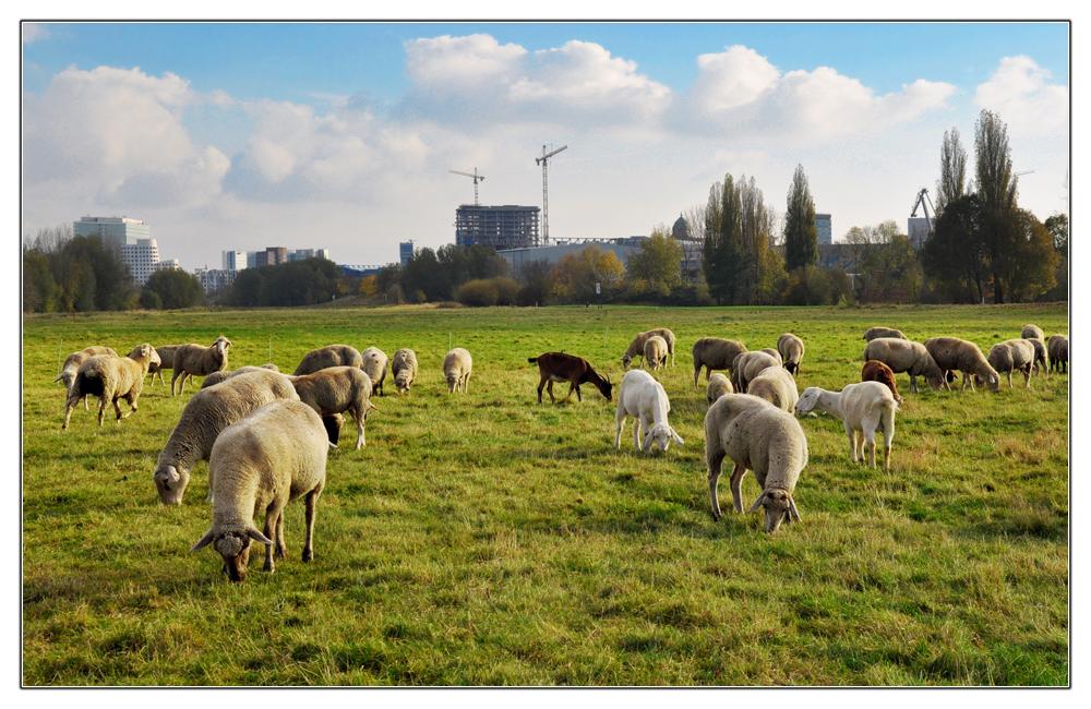 Düsseldorfer Rasenmäher