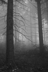 Düstere Waldwanderung im Harz