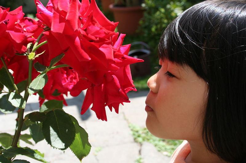Duft der Rose...