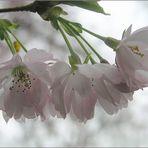 Duftige Frühlingsträume
