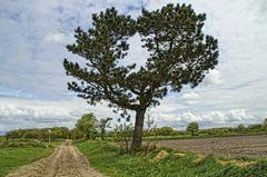 Duhner Heide 02