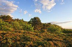 Duhner Heide 04