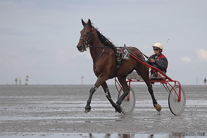 Duhner Wattrennen 2009 II
