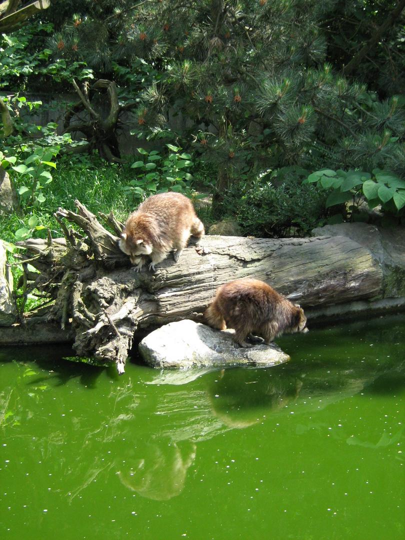 Duisburger Zoo 2