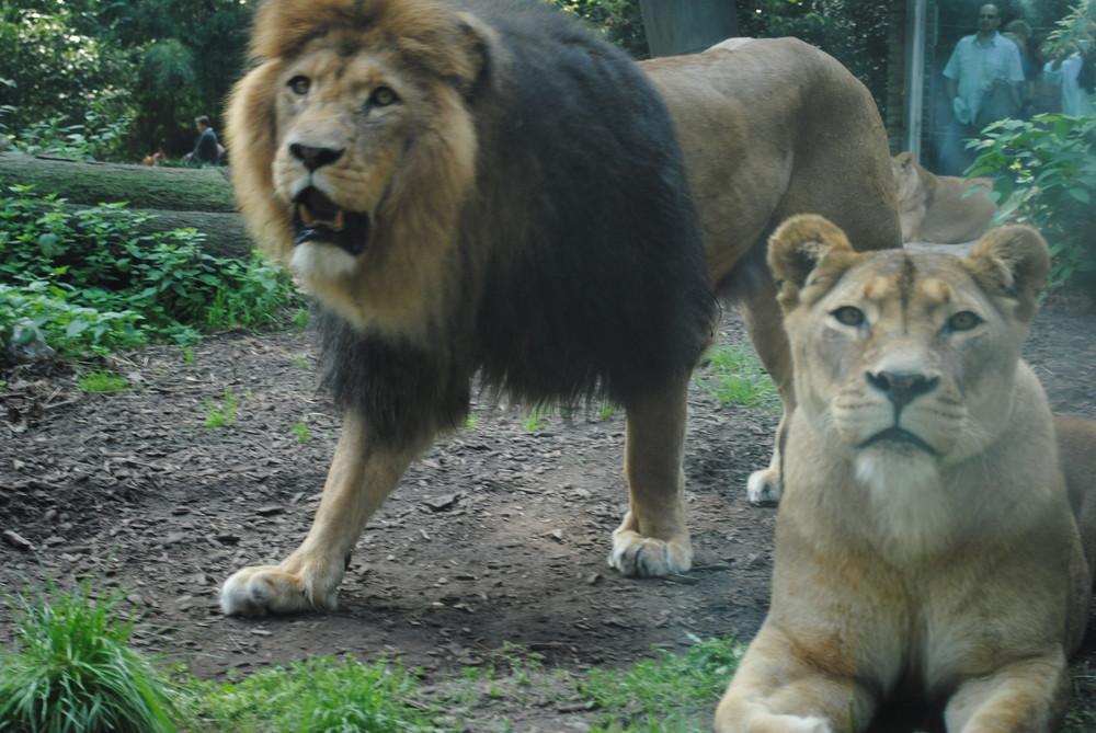 Duisburger Zoo 20.09.2009 (2)