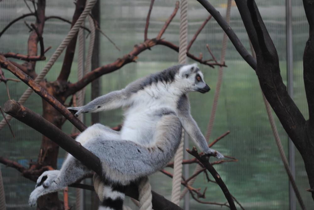 Duisburger Zoo 20.09.2009 (9)