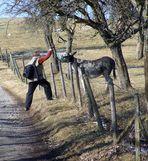 Duisdorfer Esel