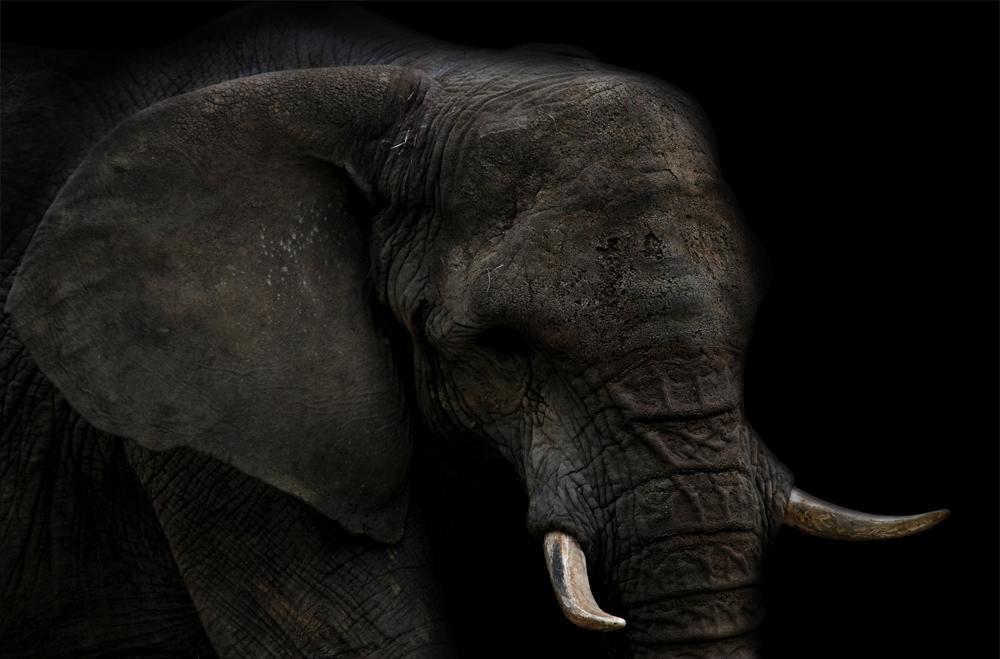 || Dumbo ||
