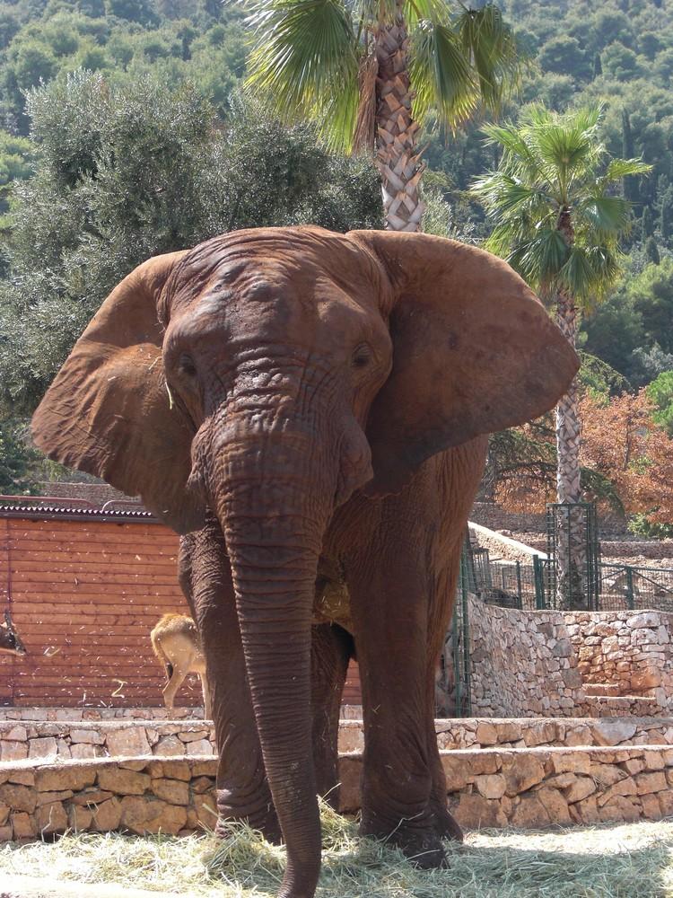 Dumbo, im Safari Park in Fasano (Italien)