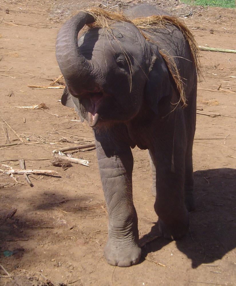 Dumbo junior