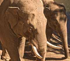 Dumbo y su mamá