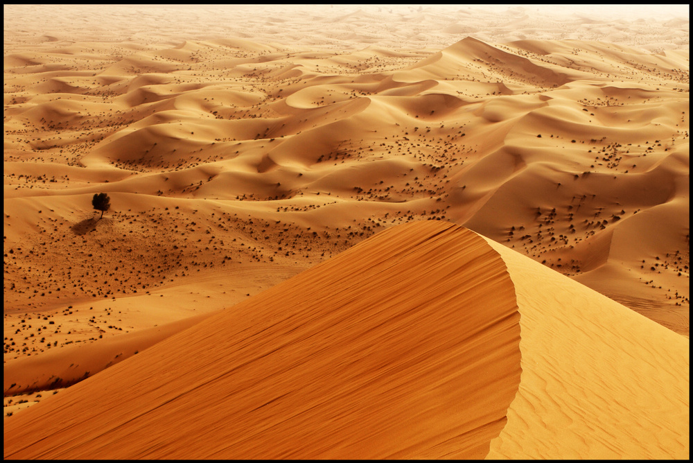 Dune in Abu Dhabi