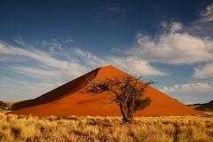 Dune with Tree