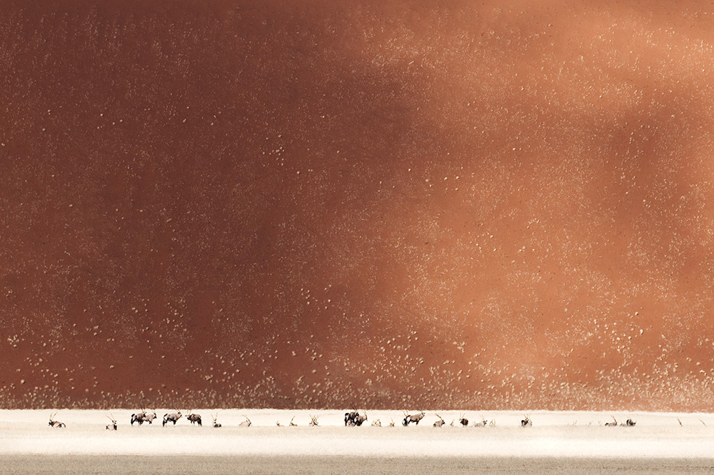dunes and oryx