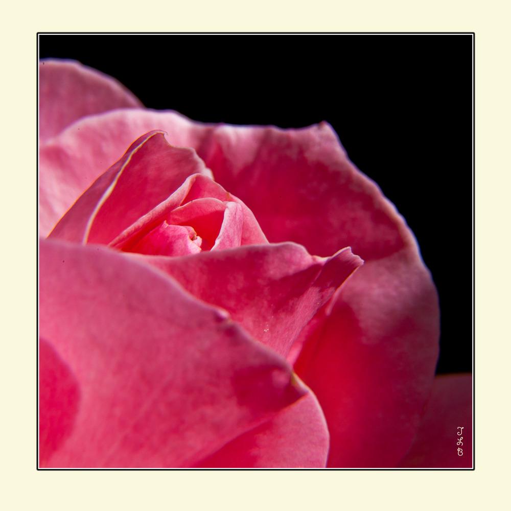 Dunes de Rose
