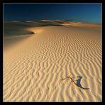 ~ Dunes ~